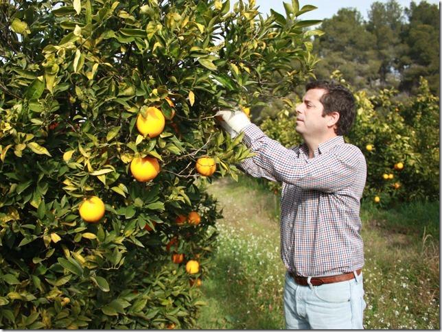 Wer möchte von euch eine Orangenbaum- oder Mandarinenbaumpatenschaft? CitrusRicus macht es mit dem Foodfunding-Projekt möglich